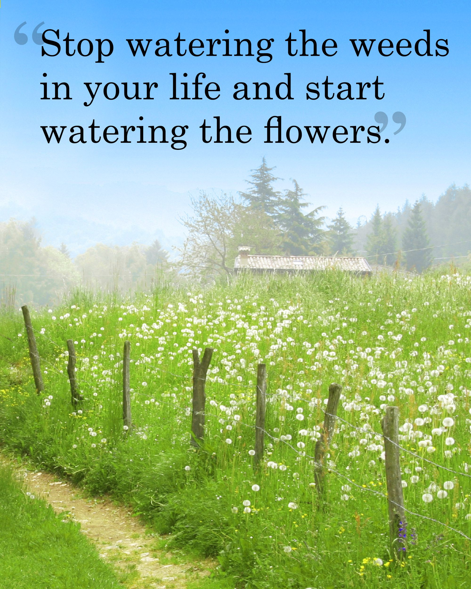 Celebrating Life Quotes 30 Best Spring Quotes  Sayings About Spring