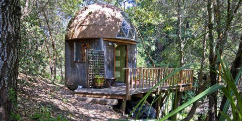 Vegetation, Natural environment, Wood, Leaf, Forest, Nature reserve, Terrestrial plant, Biome, Jungle, Woodland,