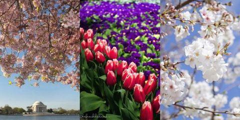 Nature, Petal, Branch, Flower, Leaf, Purple, Magenta, Colorfulness, Botany, Flowering plant,