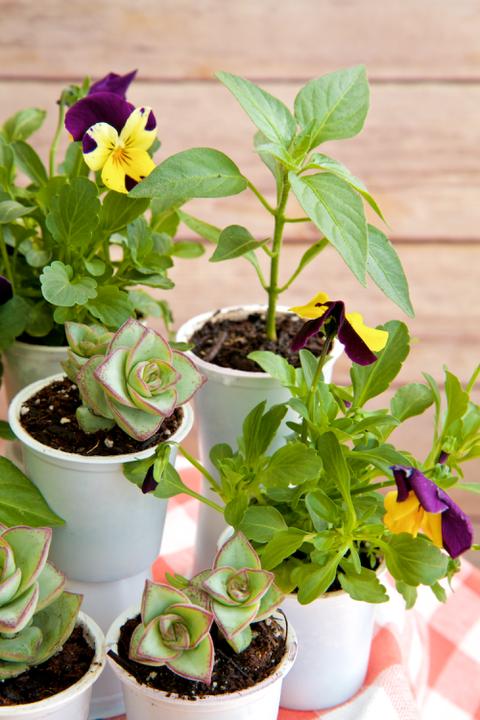 Flowerpot, Plant, Interior design, Petal, Houseplant, Terrestrial plant, Annual plant, Flowering plant, Herb, Herbaceous plant,