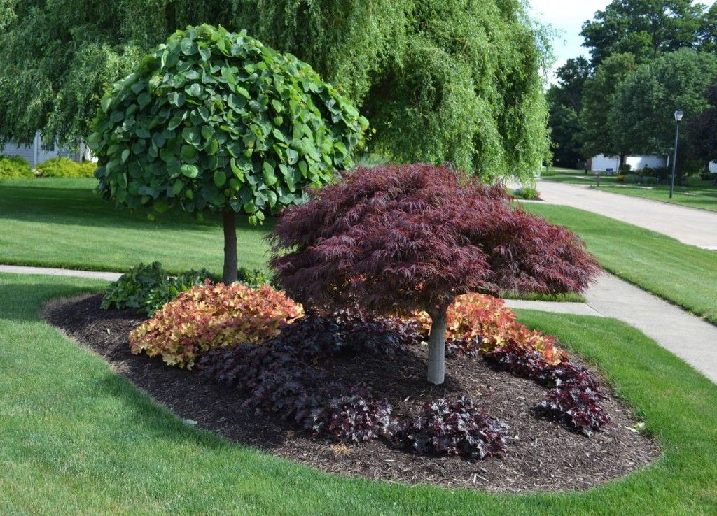 Incroyable 14 Cheap Landscaping Ideas   Budget Friendly Landscape Tips For Front Yard  And Backyard