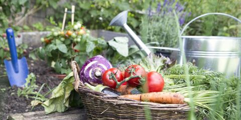 Vegan nutrition, Whole food, Local food, Ingredient, Produce, Food, Root vegetable, Vegetable, Natural foods, Purple,
