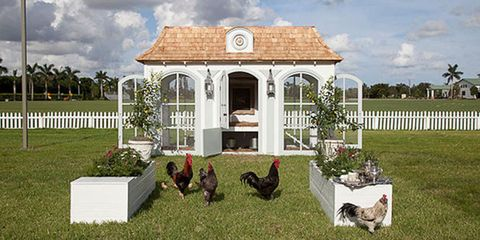 Phasianidae, Bird, Galliformes, Chicken, Beak, Fowl, Real estate, House, Poultry, Home fencing,