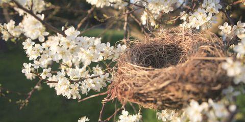 Branch, Daytime, Twig, Petal, Flower, Bird nest, Nest, Botany, Spring, Terrestrial plant,