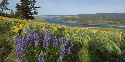 Natural environment, Plant, Natural landscape, Plant community, Flower, Landscape, Wildflower, Meadow, Nature reserve, Flowering plant,