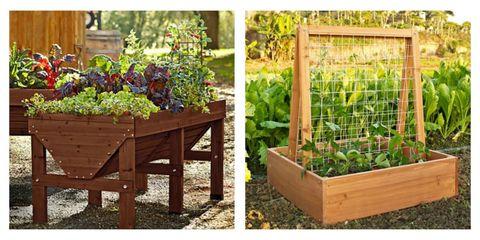 Plant, Garden, Shrub, Produce, Annual plant, Backyard, Herb, Plantation, Gardening, Yard,