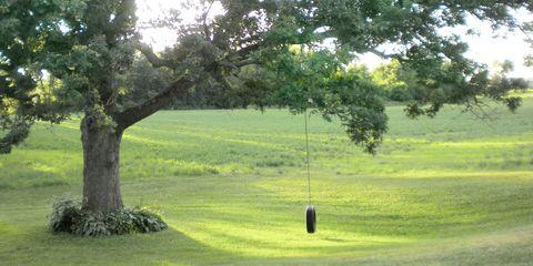 Grass, Branch, Plant, Tree, Landscape, Leaf, Natural landscape, Plain, Land lot, Woody plant,