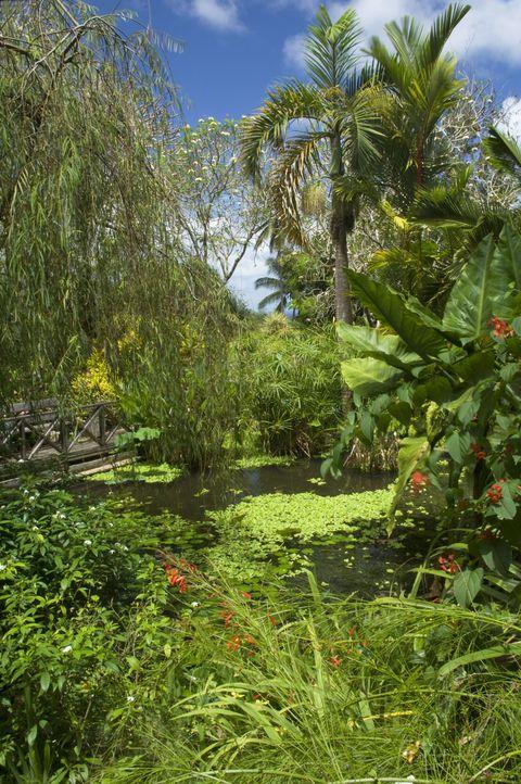 Vegetation, Nature, Plant, Plant community, Garden, Shrub, Woody plant, Botany, Terrestrial plant, Arecales,