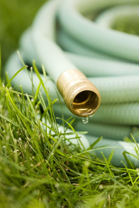 Grass, Grass family, Cable, Home accessories, Brass, Hose,