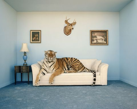 Room, Interior design, Wood, Floor, Antler, Wall, Flooring, Interior design, Terrestrial animal, Horn,