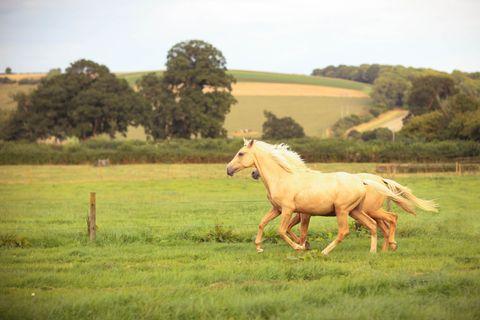 Pasture, Horse, Landscape, Natural landscape, Grassland, Working animal, Plain, Rural area, Field, Farm,