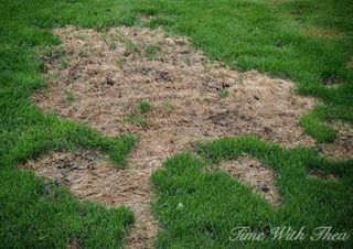 How to Fix Dog Urine Patches In Grass - How to Repair Your Lawn