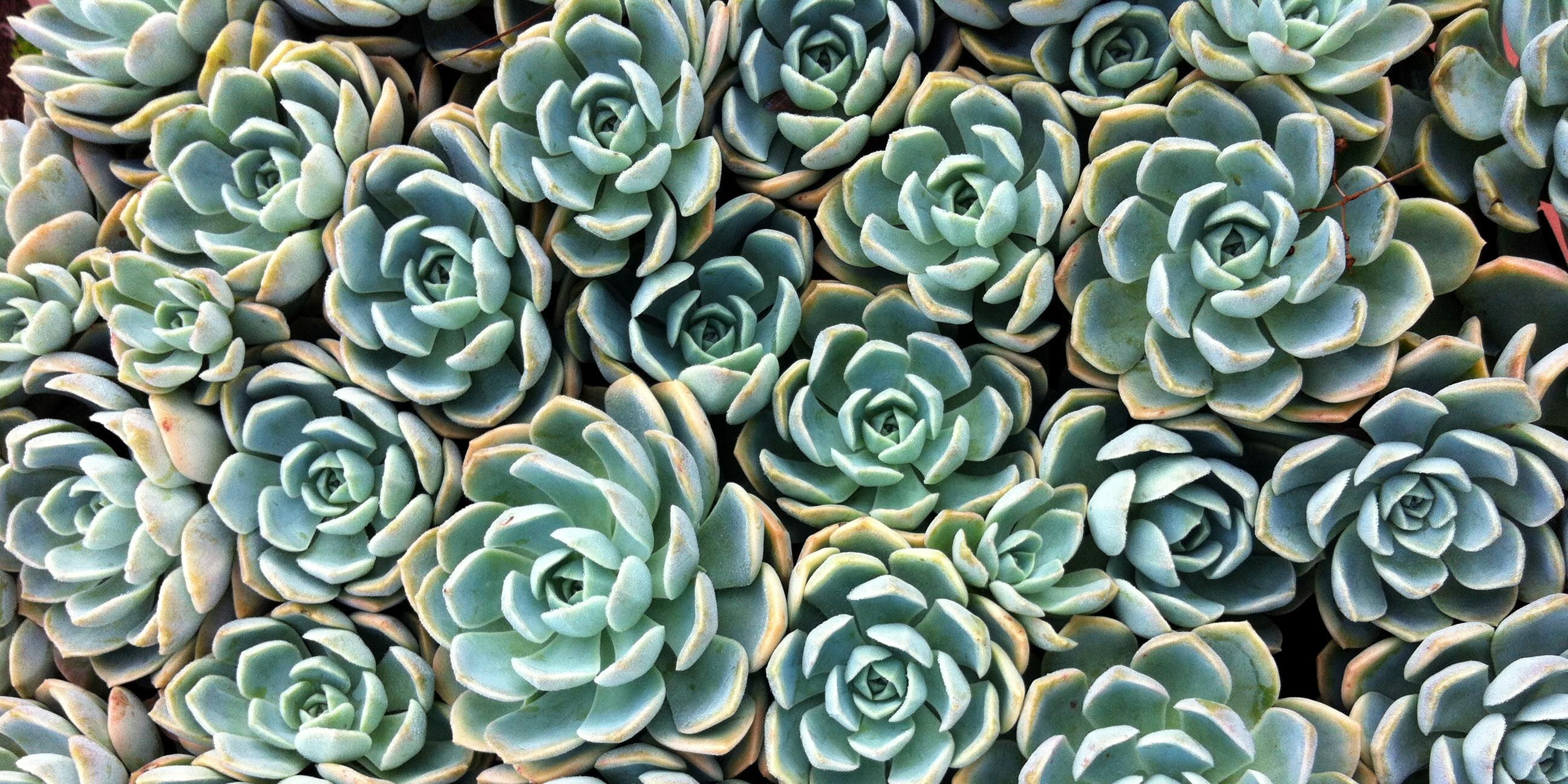 10 Things You Need to Know About Succulents