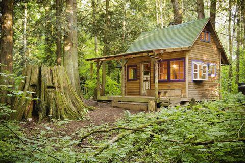 House, Tree, Cottage, Natural landscape, Property, Building, Forest, Home, Shack, Log cabin,