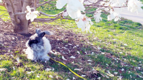 Grass, Daytime, Twig, Groundcover, Fur, Spring, Dog breed, Rabbit, Companion dog,