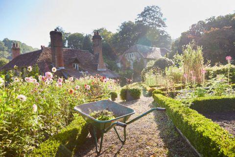 Wheelbarrow, Plant, Shrub, Garden, Cart, Groundcover, House, Hedge, Garden tool, Yard,