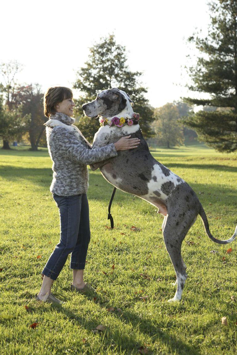 Most Popular Dog Breeds America S Favorite Canine Breeds
