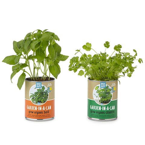 canned herbs