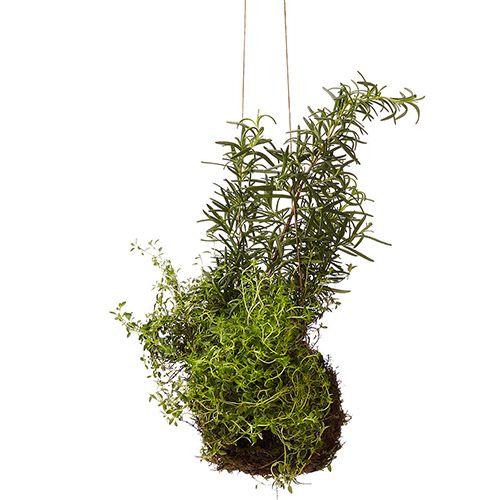 indoor garden string