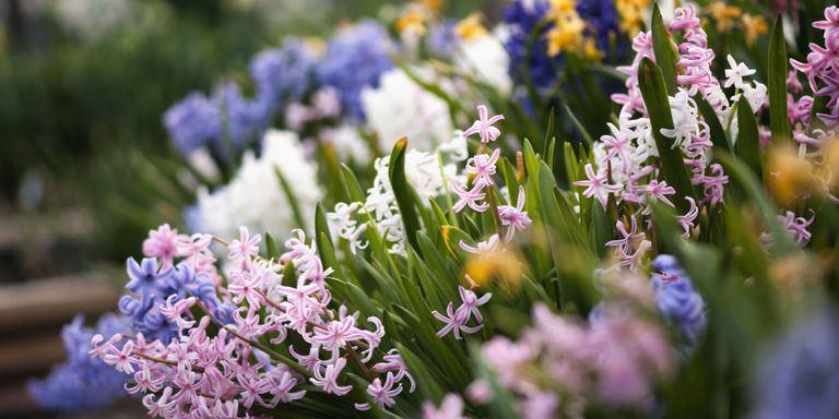 50 best types of flowers pretty pictures of garden flowers - Landscape elements that you should consider for your yard ...