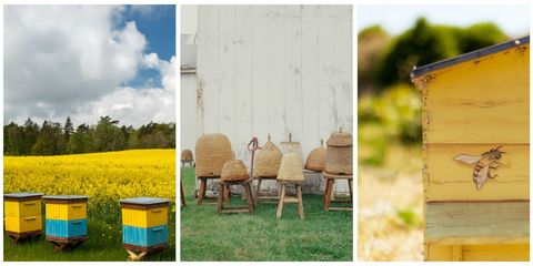 Wood, Field, Plain, Rectangle, Agriculture, Hardwood, Outdoor furniture, Wood stain, Farm, Prairie,