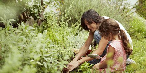 Hand, Plant community, People in nature, Ingredient, Terrestrial plant, Soil, Shrub, Garden, Gardener, Groundcover,