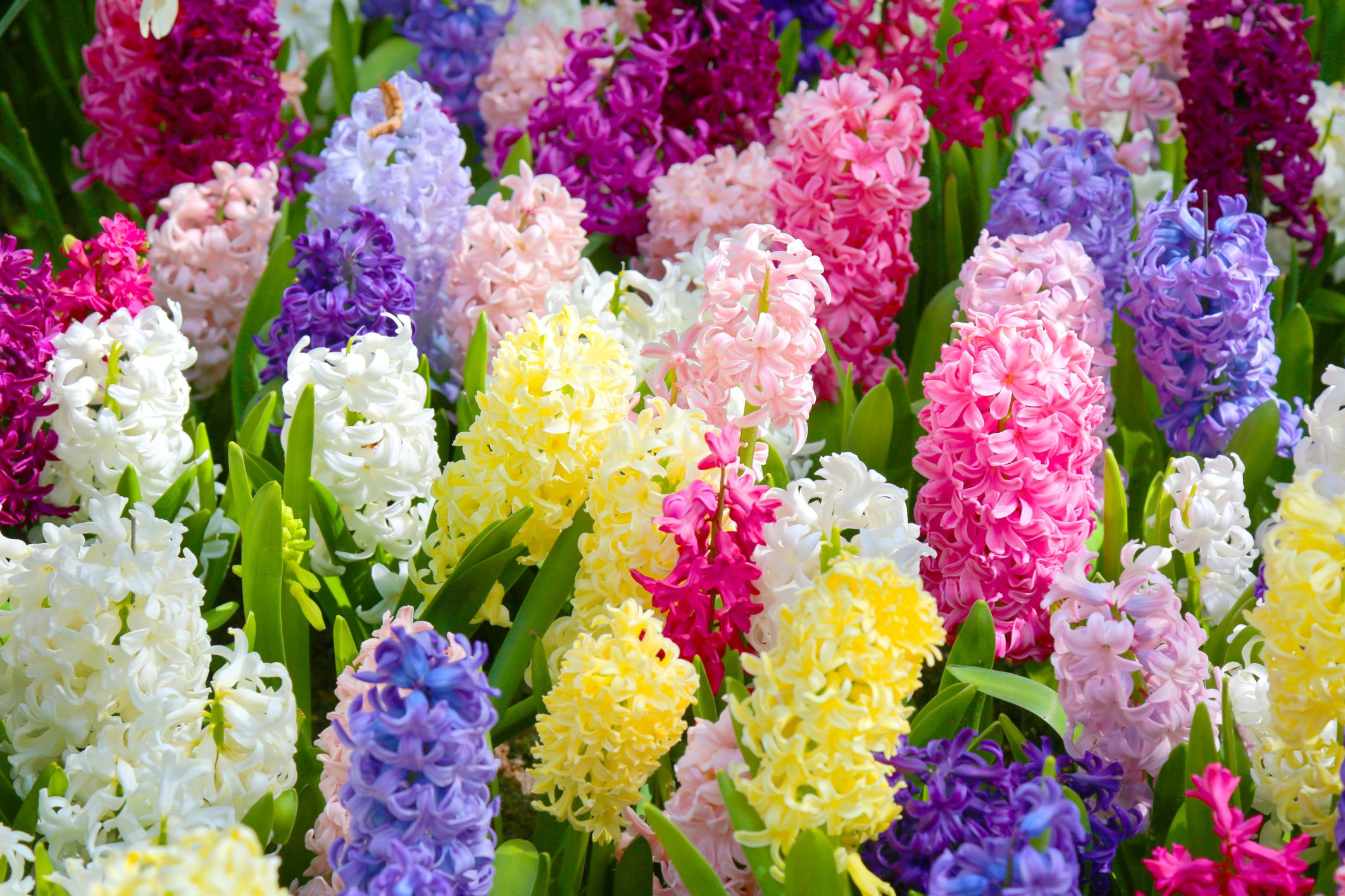 55 Best Types Of Flowers Pretty Pictures Of Garden Flowers