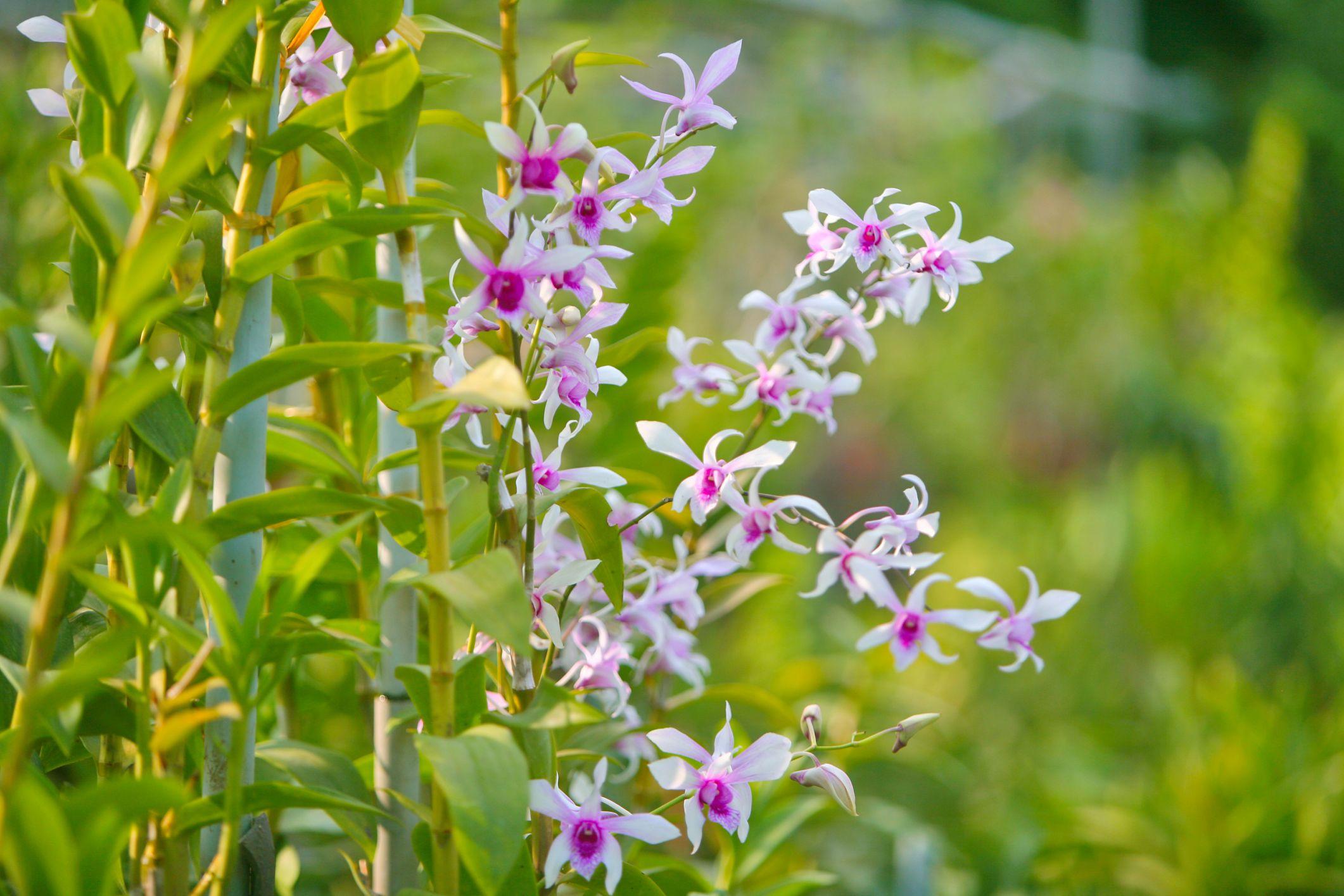 55 best types of flowers pretty pictures of garden flowers izmirmasajfo