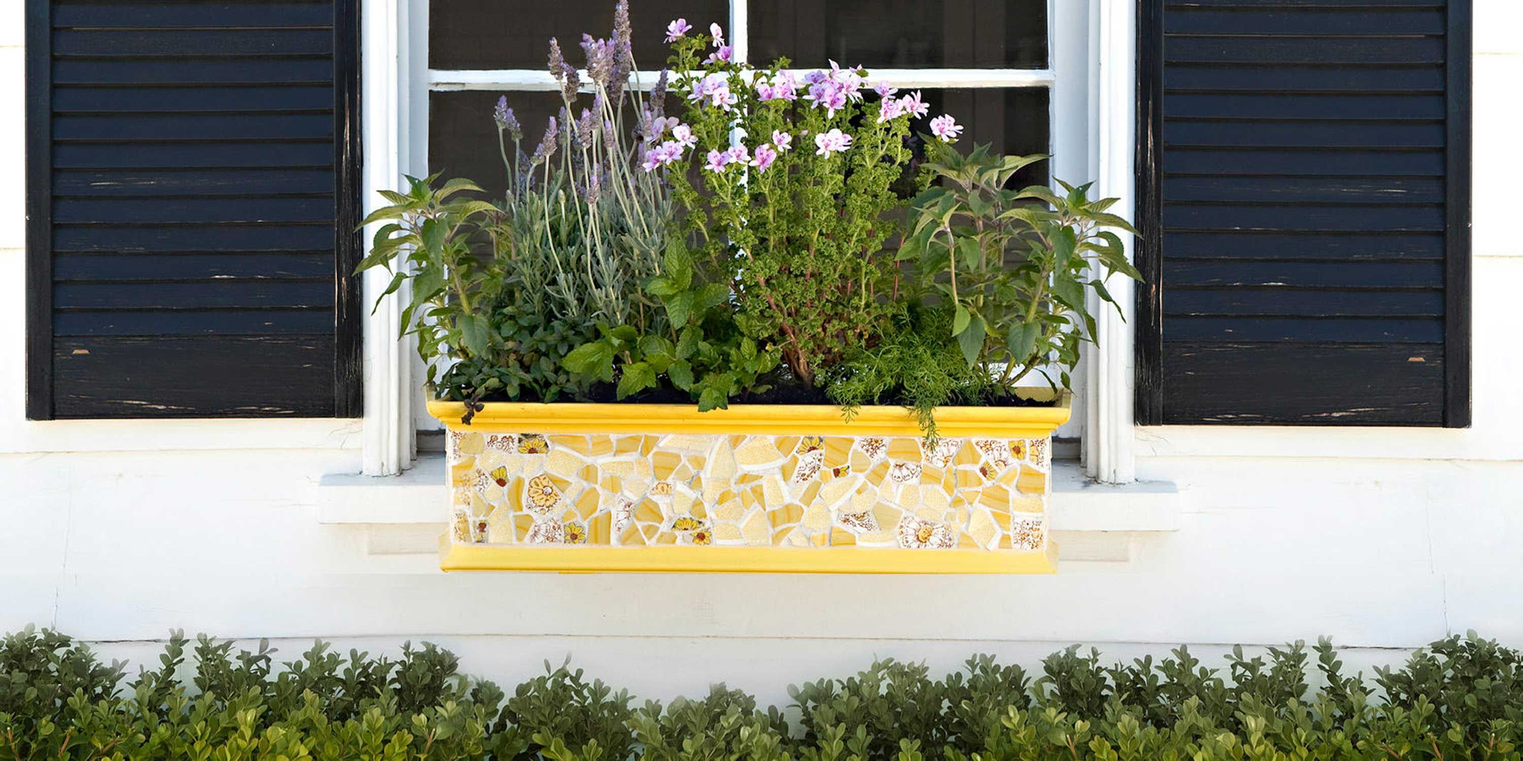 18 Fun Gardening Ideas For Your Window Bo Box Flowers Tips And