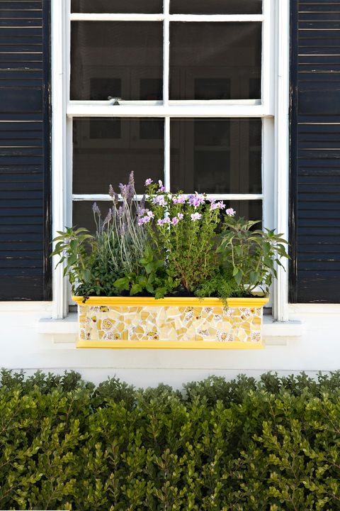 Plant, Shrub, Flower, Wall, House, Fixture, Garden, Rectangle, Groundcover, Annual plant,
