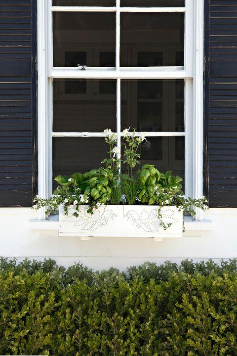 Window, Shrub, Wall, Fixture, House, Daylighting, Rectangle, Sash window, Annual plant, Window treatment,