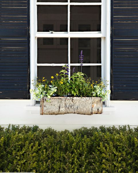 Plant, Wall, Shrub, Fixture, Rectangle, Groundcover, Home door, Annual plant, Houseplant, Daylighting,