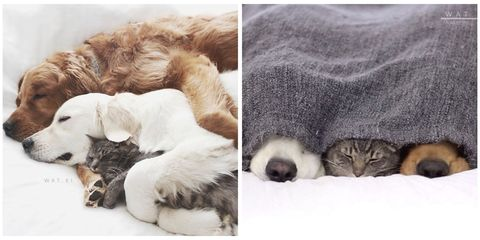 Organism, Carnivore, Cat, Small to medium-sized cats, Terrestrial animal, Felidae, Comfort, Dog breed, Paw, Fur,