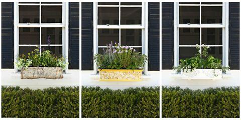Grass, Plant, Shrub, Fixture, Groundcover, Garden, Door, Lawn, Yard, Rectangle,
