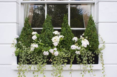 18 Fun Gardening Ideas For Your Window Boxes Window Box