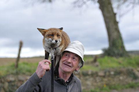 Vertebrate, Outerwear, Carnivore, Mammal, Facial expression, Jacket, Fox, Snout, Red fox, Terrestrial animal,