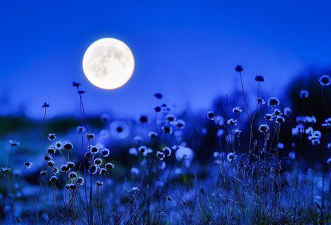 Atmospheric phenomenon, Astronomical object, Meadow, Wildflower, Moon, Full moon, Moonlight, Herbaceous plant, Pedicel, Celestial event,