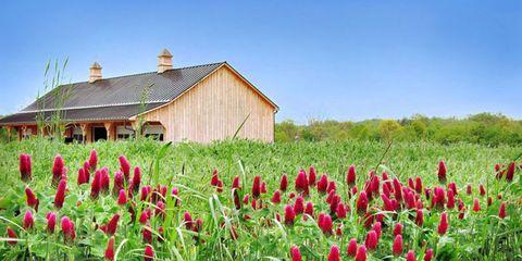 Plant, Flower, House, Land lot, Rural area, Farm, Petal, Plantation, Flowering plant, Field,