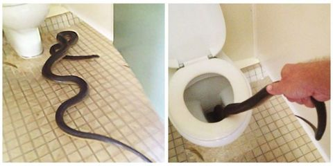 Product, Toilet seat, Wall, Toilet, Purple, Floor, Flooring, Plumbing fixture, Bathroom, Paper,