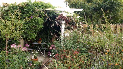 Vegetation, Plant, Shrub, Plant community, Garden, Backyard, Grass family, Yard, Flowering plant, Botanical garden,