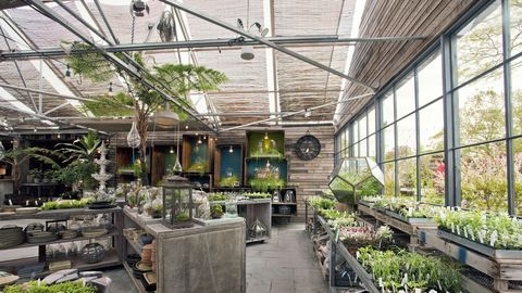 Plant, Greenhouse, Ceiling, Garden, Fixture, Flowerpot, Daylighting, Beam, Houseplant, Fines herbes,