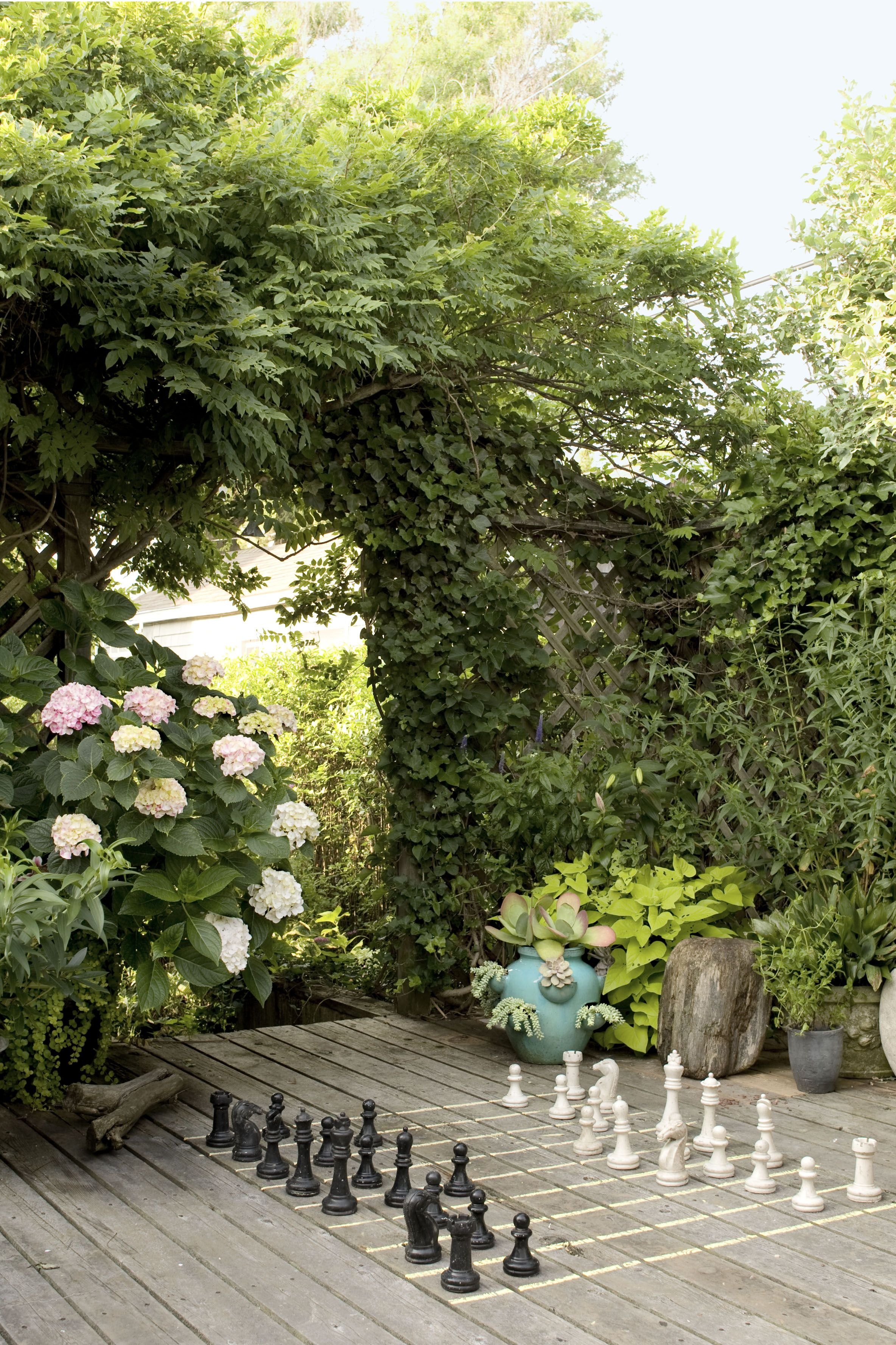 charming yard privacy plants pictures best image engine oneconf us