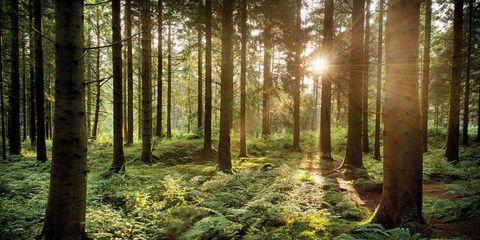 Nature, Vegetation, Natural landscape, Natural environment, Green, Sun, Tree, Plant community, Leaf, Deciduous,