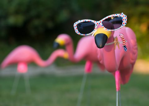 Flamingo, Pink, Greater flamingo, Colorfulness, Ecoregion, Sunglasses, Bird, Eye glass accessory, Goggles, Water bird,