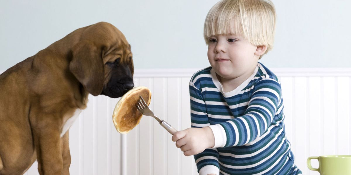 15 Foods You Should Never Give Your Dog