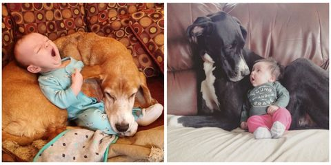 Human, Dog breed, Comfort, Dog, Carnivore, Mammal, Child, Baby & toddler clothing, Working animal, Snout,