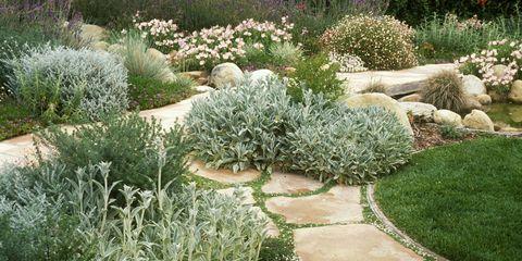 Grass, Plant, Shrub, Garden, Plant community, Groundcover, Subshrub, Grass family, Flowering plant, Annual plant,