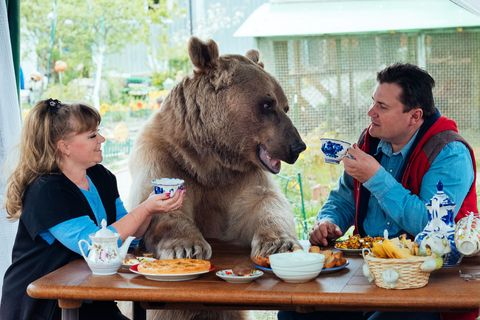 Table, Cuisine, Dish, Tableware, Food, Grizzly bear, Meal, Carnivore, Eating, Sharing,