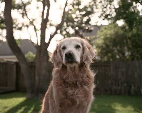 Bretagne, September 11 search and rescue dog