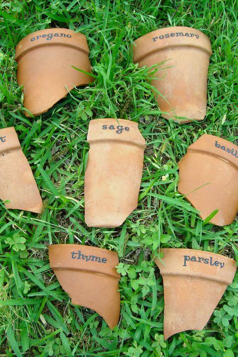 Grass, Flowerpot, Plant,